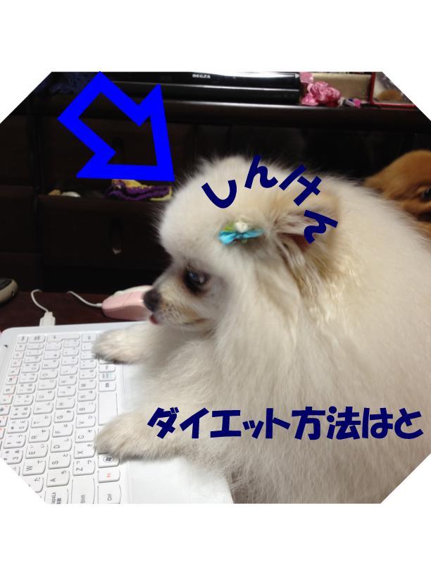 20130407173416c2b.jpg