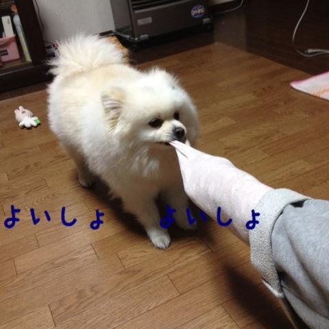 fc2blog_2013050721440957f.jpg
