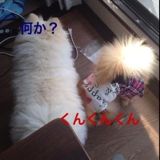 fc2blog_20130525163548a3f.jpg