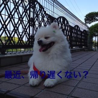 fc2blog_2013052921564318d.jpg