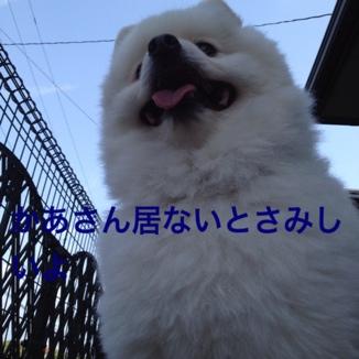 fc2blog_20130529215952c01.jpg