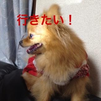 fc2blog_20130531204939a3b.jpg