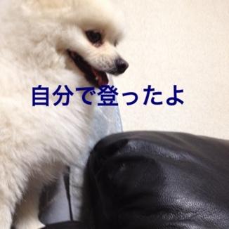 fc2blog_20130610170108275.jpg