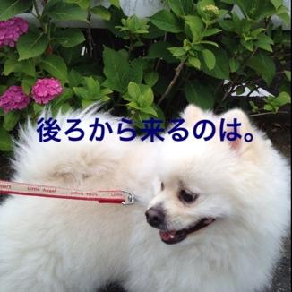 fc2blog_20130614205406061.jpg