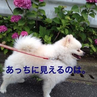 fc2blog_2013061420553744a.jpg