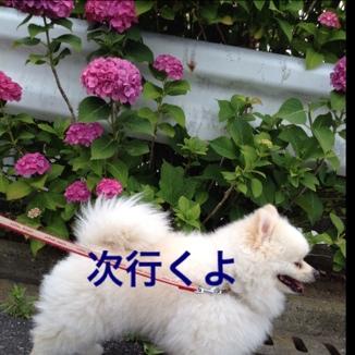 fc2blog_2013061420582814a.jpg