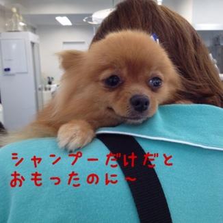 fc2blog_2013061715372131e.jpg