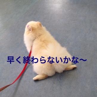 fc2blog_201306182134566e1.jpg