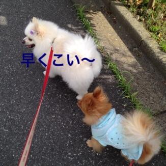 fc2blog_201306222052149d3.jpg
