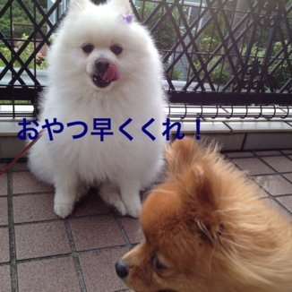 fc2blog_20130624202337d3a.jpg