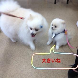 fc2blog_20130708130201eed.jpg
