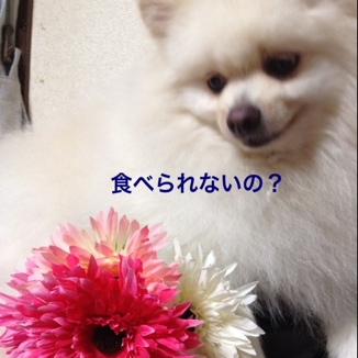 fc2blog_2013072515190834b.jpg