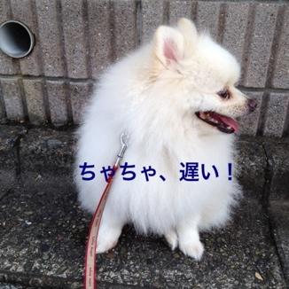 fc2blog_2013072818503257e.jpg