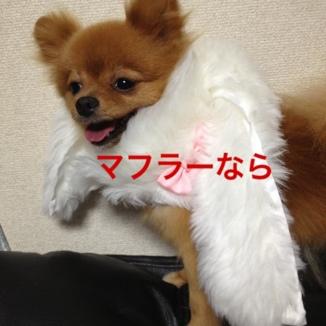fc2blog_20130808131639a8f.jpg