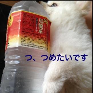fc2blog_20130809212220c8f.jpg