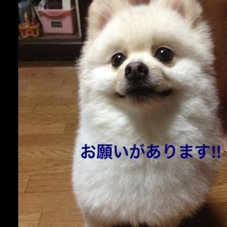 fc2blog_20130811205750b7e.jpg
