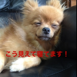 fc2blog_20130812205625a0f.jpg