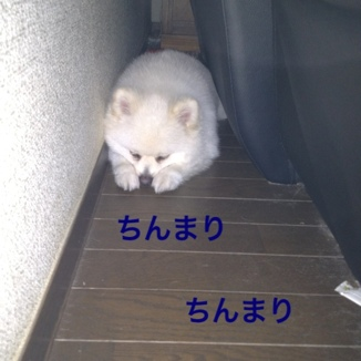 fc2blog_20130812205850966.jpg