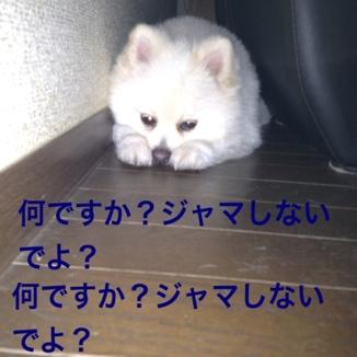fc2blog_20130812205940937.jpg