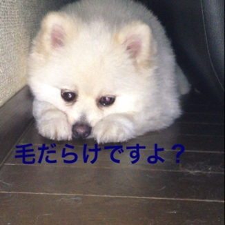 fc2blog_20130812210107a82.jpg