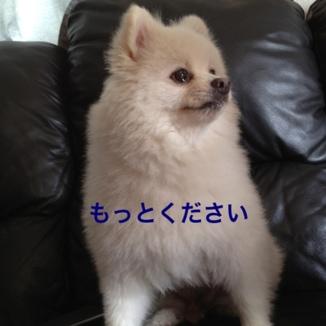 fc2blog_201308171913423ab.jpg