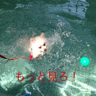 fc2blog_2013081818471799f.jpg