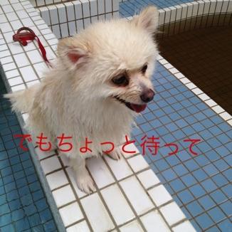 fc2blog_20130818185140a7f.jpg