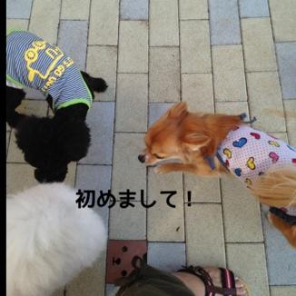 fc2blog_20130923151442150.jpg