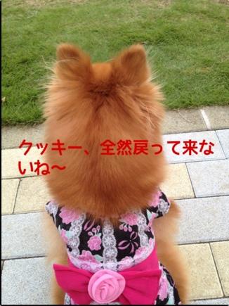 fc2blog_20130925201158b9a.jpg