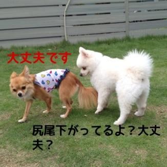 fc2blog_201309252016043a4.jpg