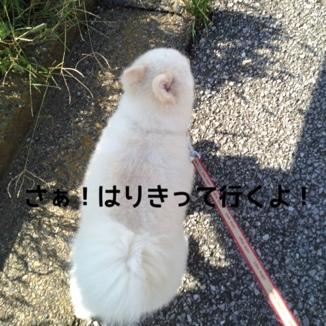 fc2blog_20130928192928aa2.jpg
