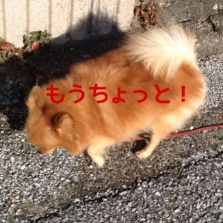 fc2blog_20130928193225af0.jpg