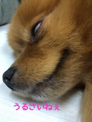 fc2blog_201410301957537c9.jpg