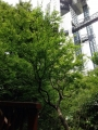 中自然の森公園2