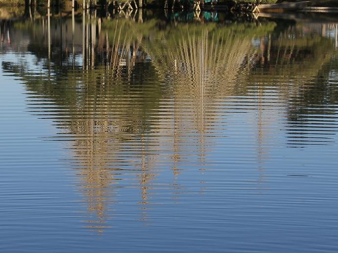 池の波紋 冬の兼六園にて