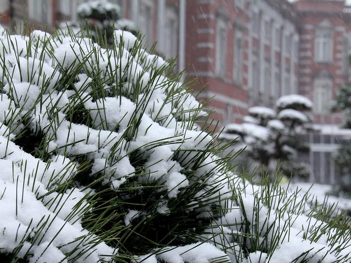 東京駅前 松の木雪化粧