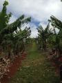 Tropical Fruit World 7 アロマスクール マッサージスクール オーストラリア