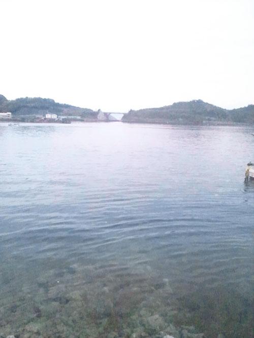 komobuchisea_pho.jpg