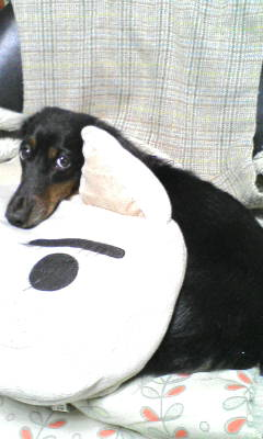 犯人(犬)