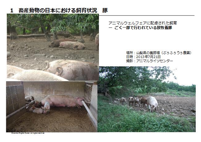 畜産動物2