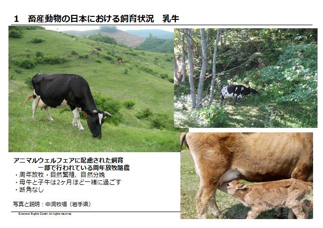 畜産動物6