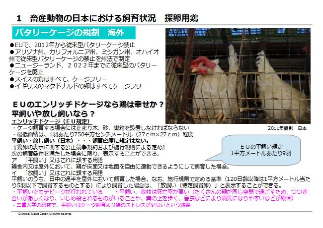 畜産動物13