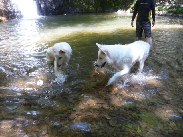 2匹は仲良く水遊びをします
