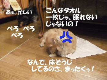 写真756(№219用)1
