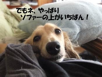写真759(№219用)1