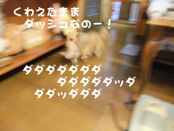 写真820(№231用)1