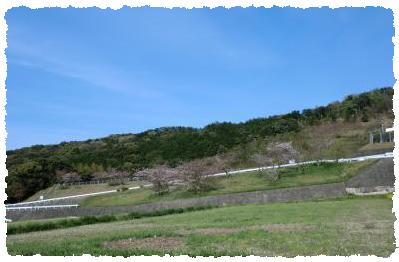 田舎 葉桜