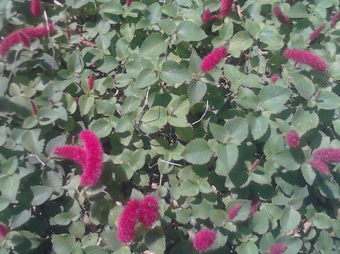 ピンクの毛虫大量発生