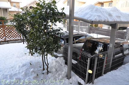 snow2014020810.jpg