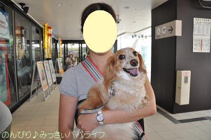 tateyama201307001.jpg